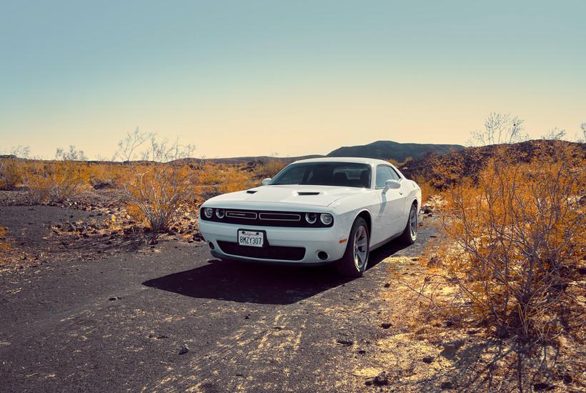 Desert Cat - Dodge Challenger