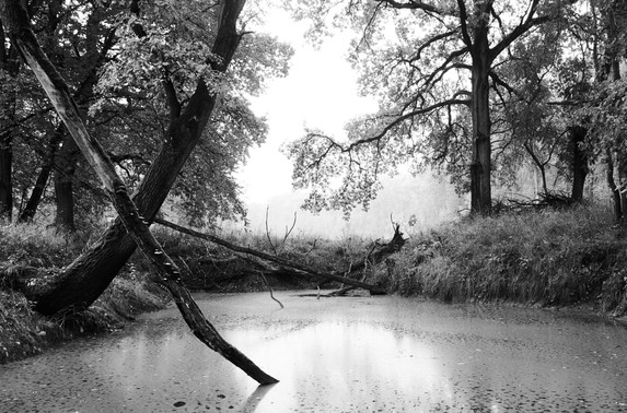 Wald, Tümpel, See, Bäume, Nebel, Herbst