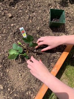 Residents begin planting
