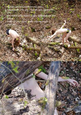 creatures in the woods #2