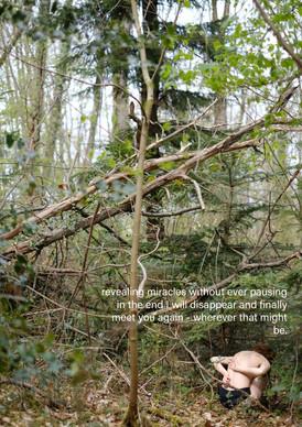 creatures in the woods #5