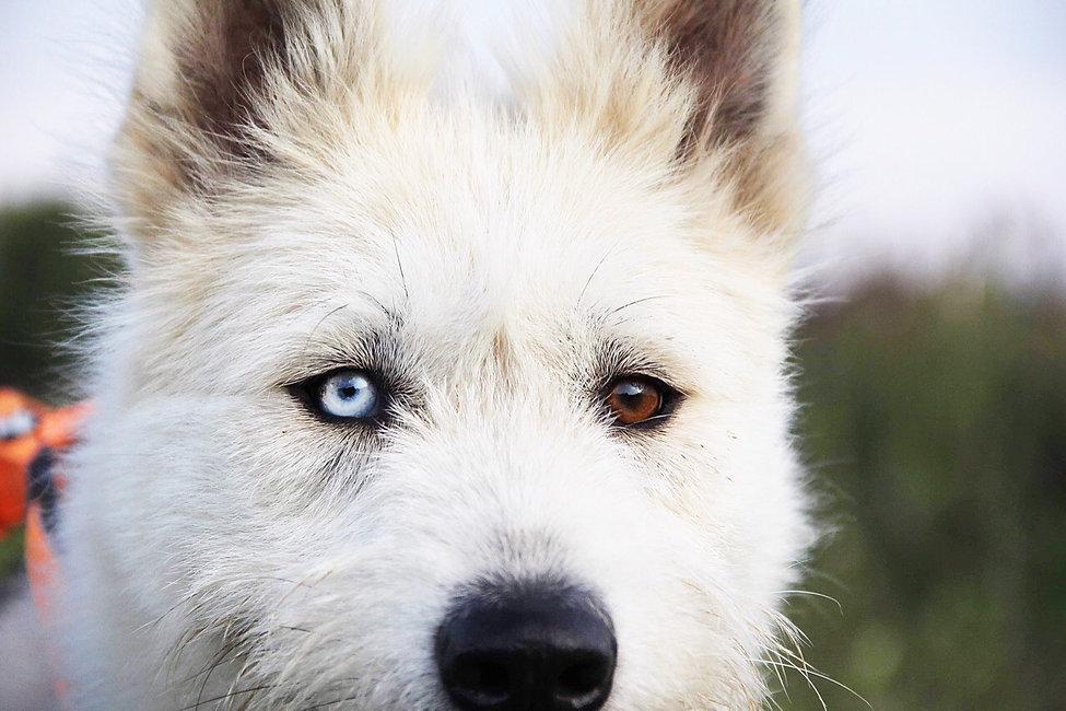 глаза собаки.jpg