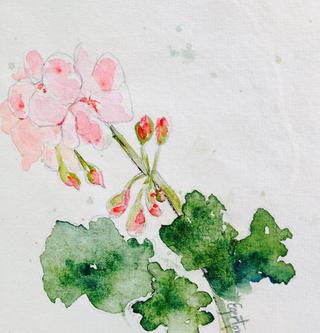 pink geranium.jpg