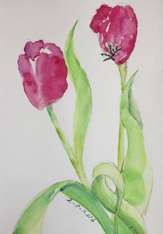 spring tulip 2016.jpg