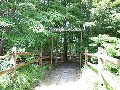 chapel in the woods-FUMC-OM.jpg
