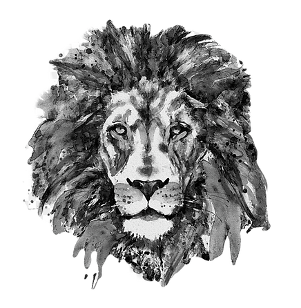 drawing-lions-black-and-white-lion-head-