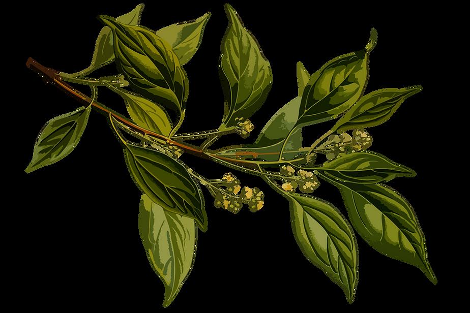 BB leaf