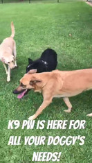 K9 PW has everything your doggy needs