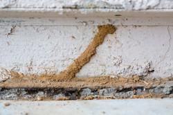 termite-tunnels-small