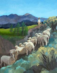 Juan Tends Sheep Near Taos