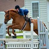 UMW Equestrian