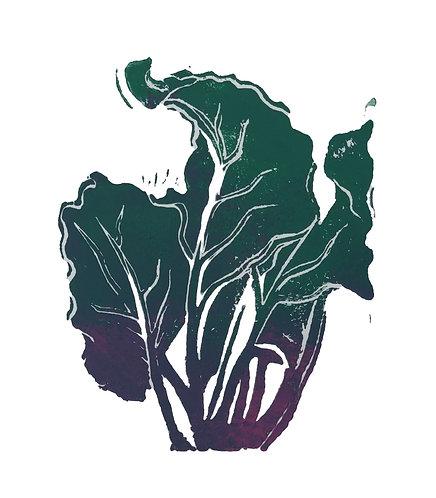 Quinn's Crops: Rainbow Beet 1/5