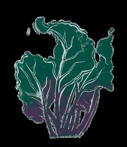 Quinn's Crops: Rainbow Beet 3/5