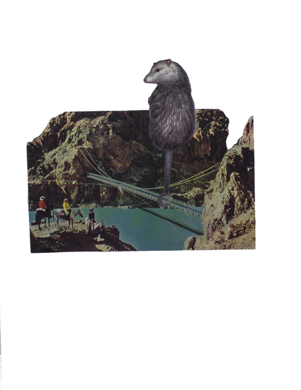 Opossum Levitation