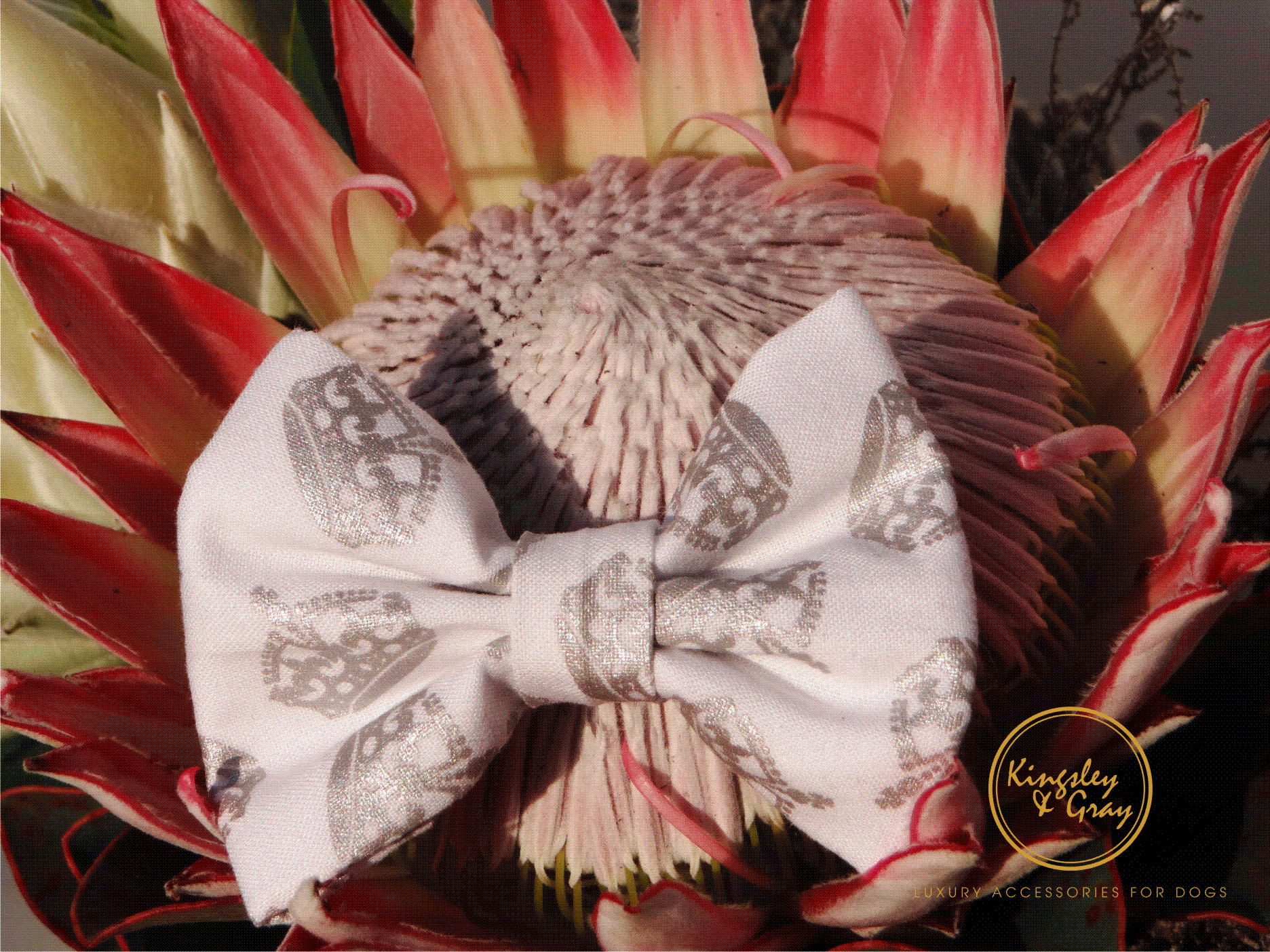 ROYAL HIGHNESS BOW TIE flower