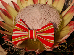 OYSTER BOX BOW TIE flower