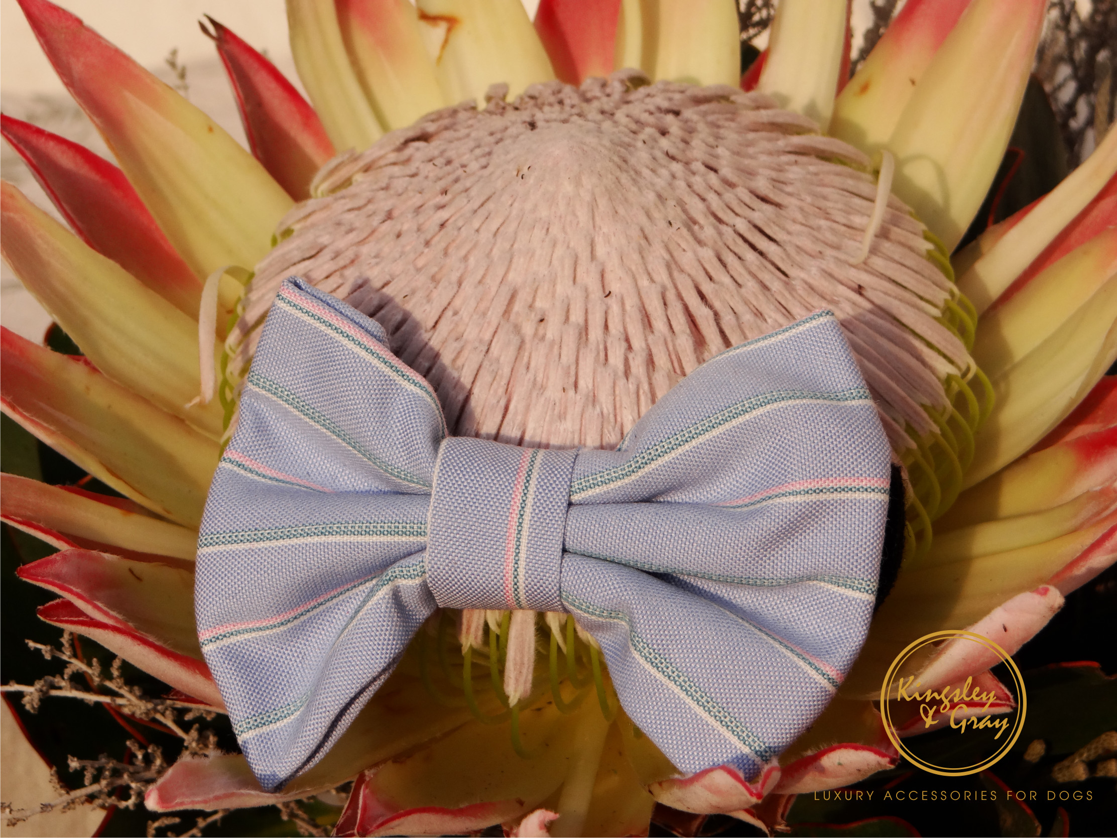 STIRLING BOW TIE flower