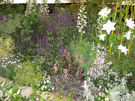 Spring Perennial Border with Salvia Caradonna & Heuchera