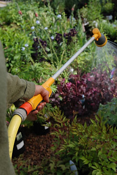 Watering newly Planted Shrubs