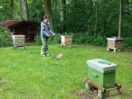 Honig aus dem Siebenstern