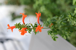 Floral Tabernas