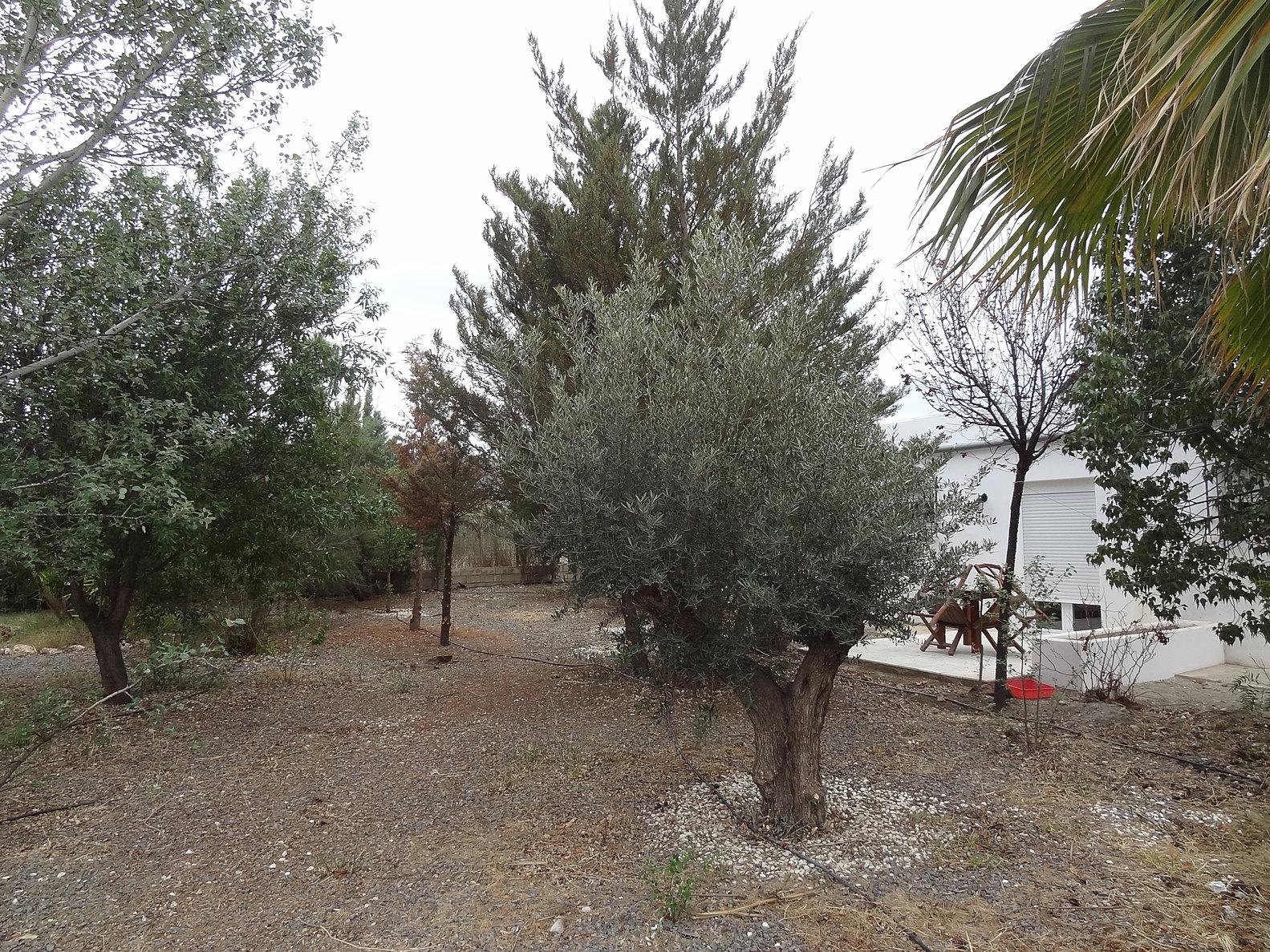 Cortijo oro verde tabernas alojamiento casa rural for Jardin 04200