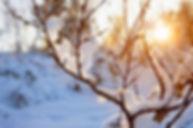 winter tree.jpg