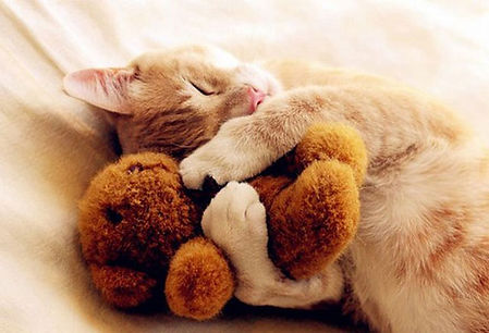 kittens-sleeping-with-a-stuffed-animal-c