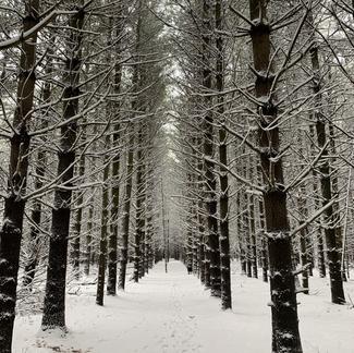 Let it flow through you like the snow blows through....
