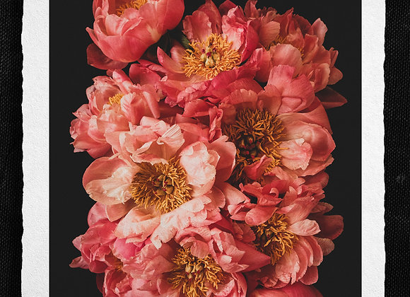 You're just gorgeous Peonies!
