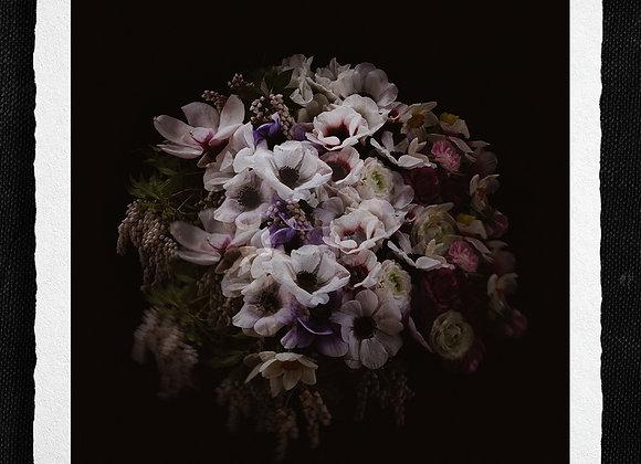 Anemone beauty
