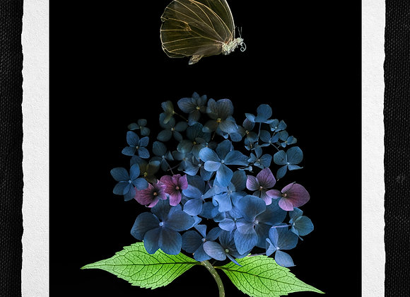 Butterfly over Meme's garden