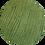 Thumbnail: * Caricia vert*