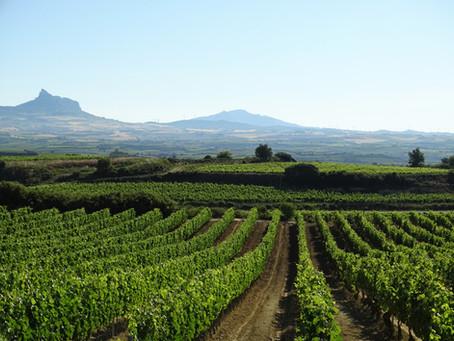 Испанские вина: Риоха