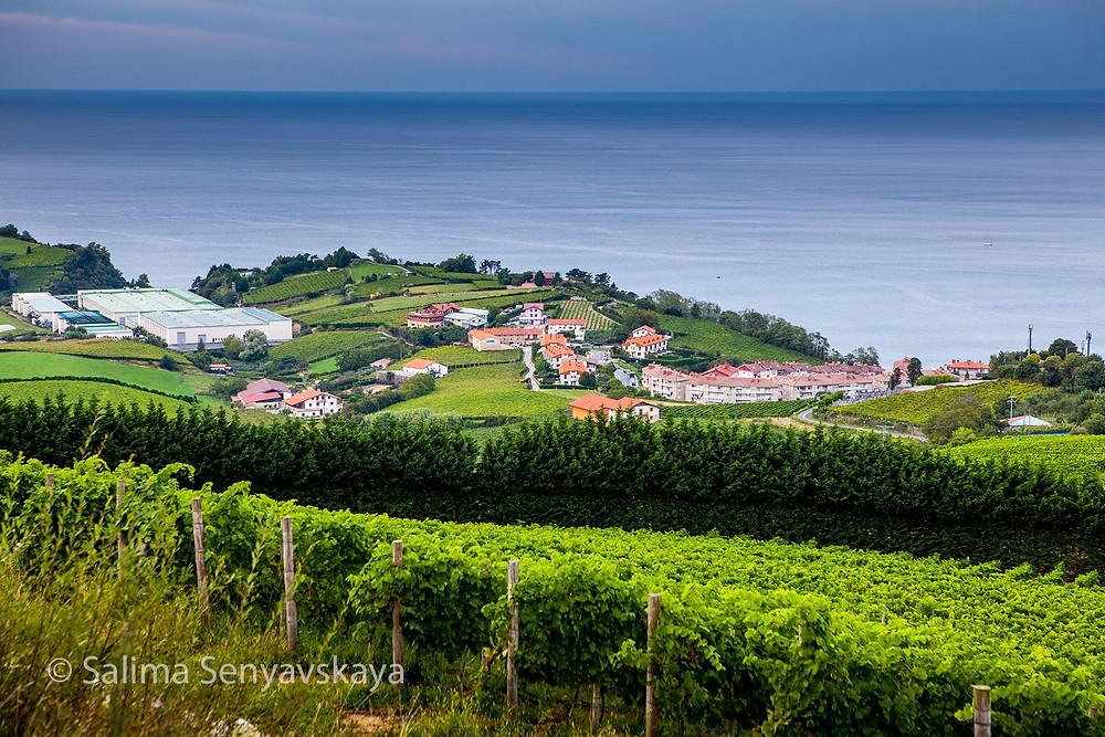 Виноградники чаколи в окрестностях Гетарии