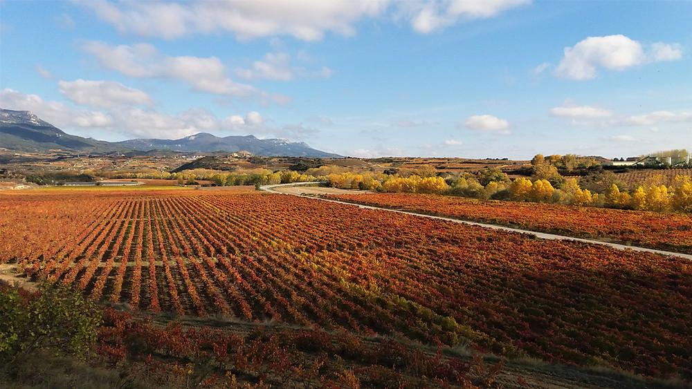 Осенние виноградники в окрестностях Аро (Риоха Альта)