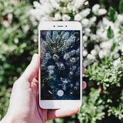 reseaux sociaux telephone photo