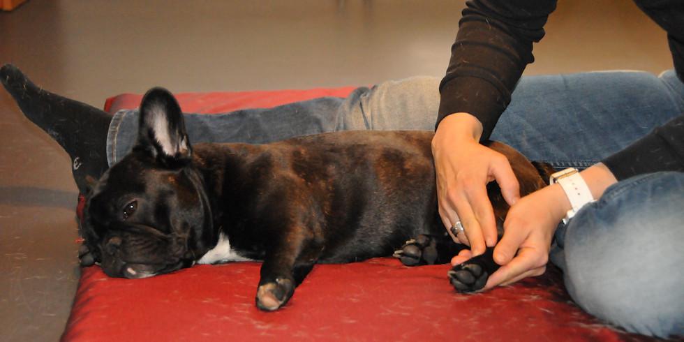 Shiatsu Schnupperkurs - Hund (1)