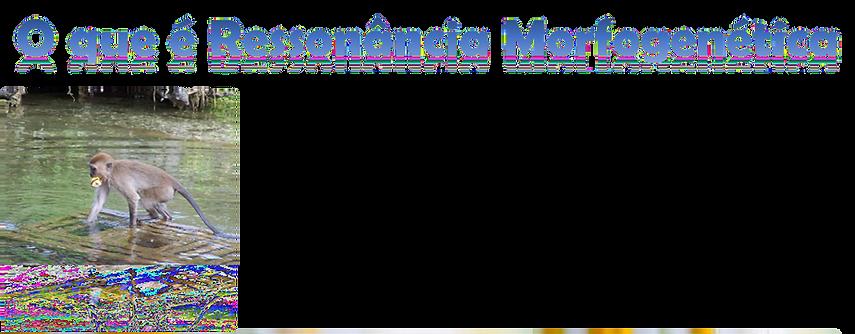 anuncio mofogenetica_edited.png