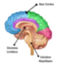 3-partes-do-cerebro.jpg