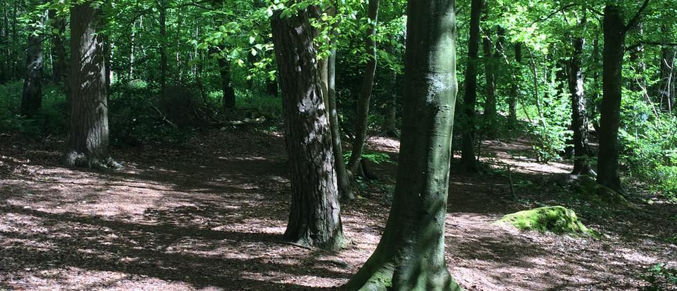 Milber Woods