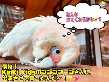「KinKi Kidsのブンブブーン」出演!