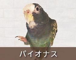 パイオナス