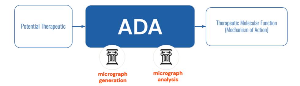 ADA diagram for website_edited.png