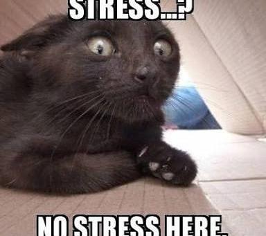 Queda de cabelo e o stress