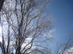 winter-2008 023