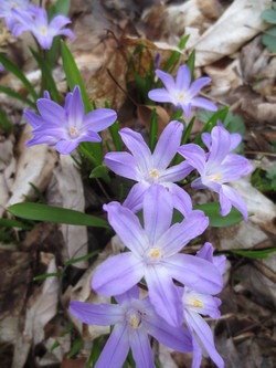 Little Spring Flowers