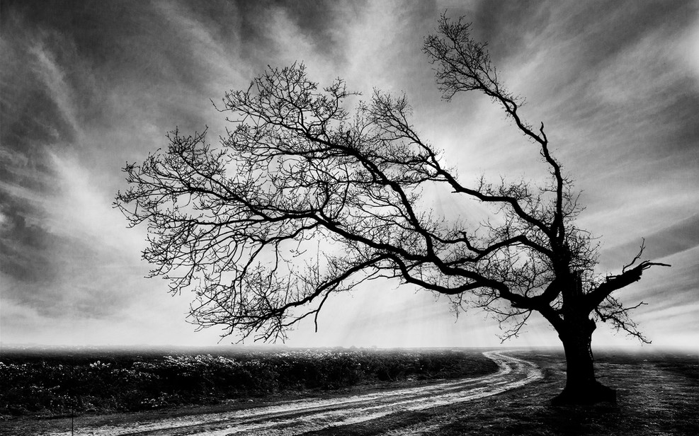 New forest tree on the road to nowhere