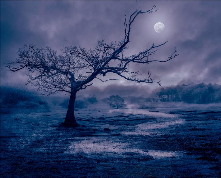 Monlight Forest