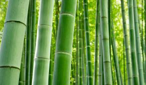 Le bambou, une fibre naturelle douce pour vous… et pour la planète!